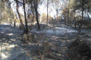 Αίσχος! Έκαψαν ξανά το δάσος του Νικολουδάκη!
